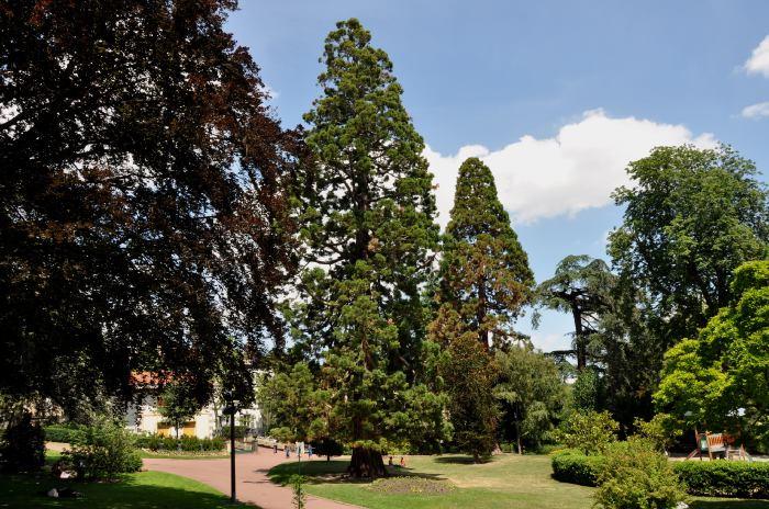 — séquoias — Jardin Lecoq — Clermont-Ferrand —