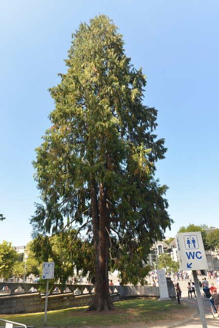 Sequoyah sur l'esplande du sanctuaire — Lourdes