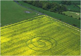 crop circle dans un  champ de colza