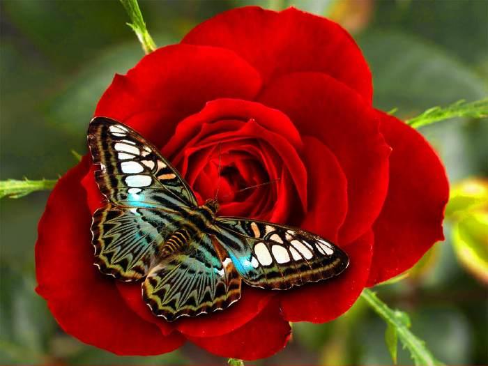 Papillon sur une feleur