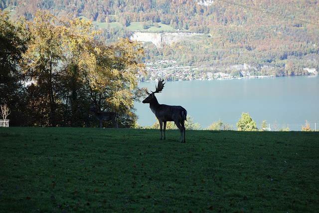 — Rives du lac de Brienz à Bönigen — 24 octobre 2013 —