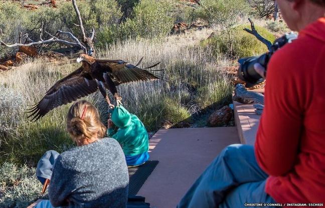 Aigle tentant d'enlever un garçonnet dans un parc d'attractions