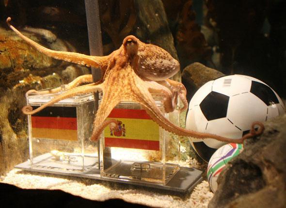 Paul le poulpe et son choix du drapeau Hispanique avant la Finale