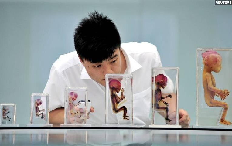 """Fœtus exposés au musée """"Mysterious Life"""" à Dalian en Chine"""