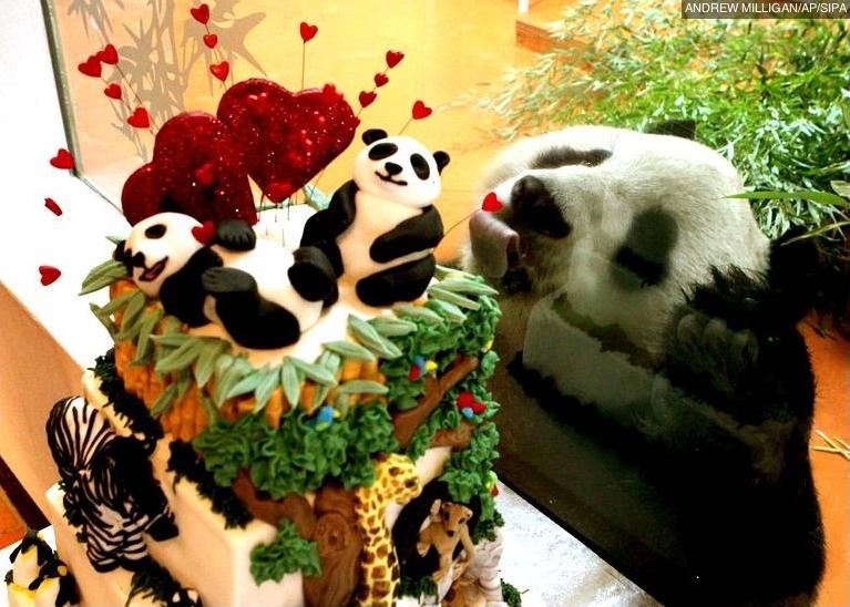 Fête de la Saint Valentin pour animaux...